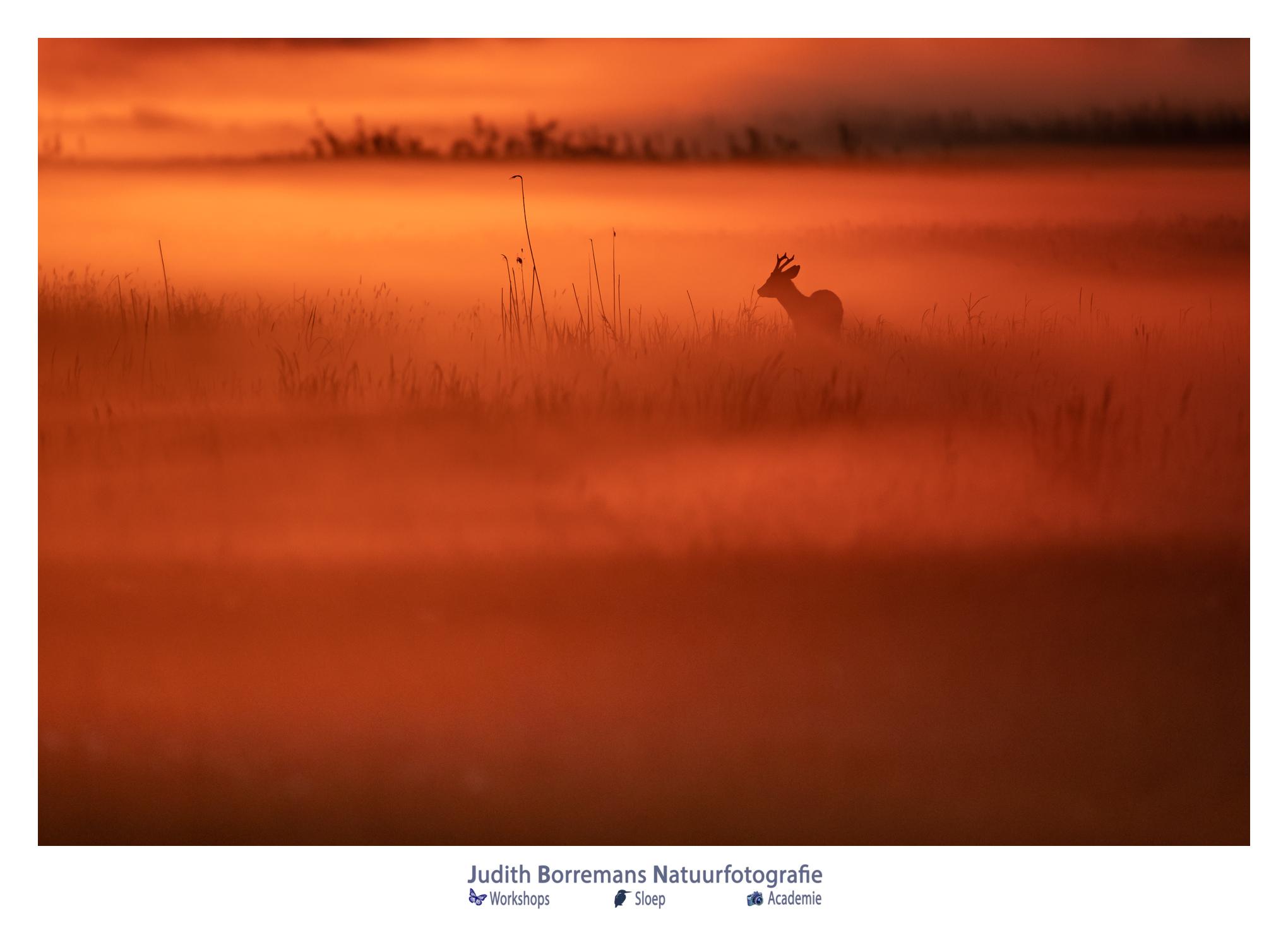 Ree In De Mist