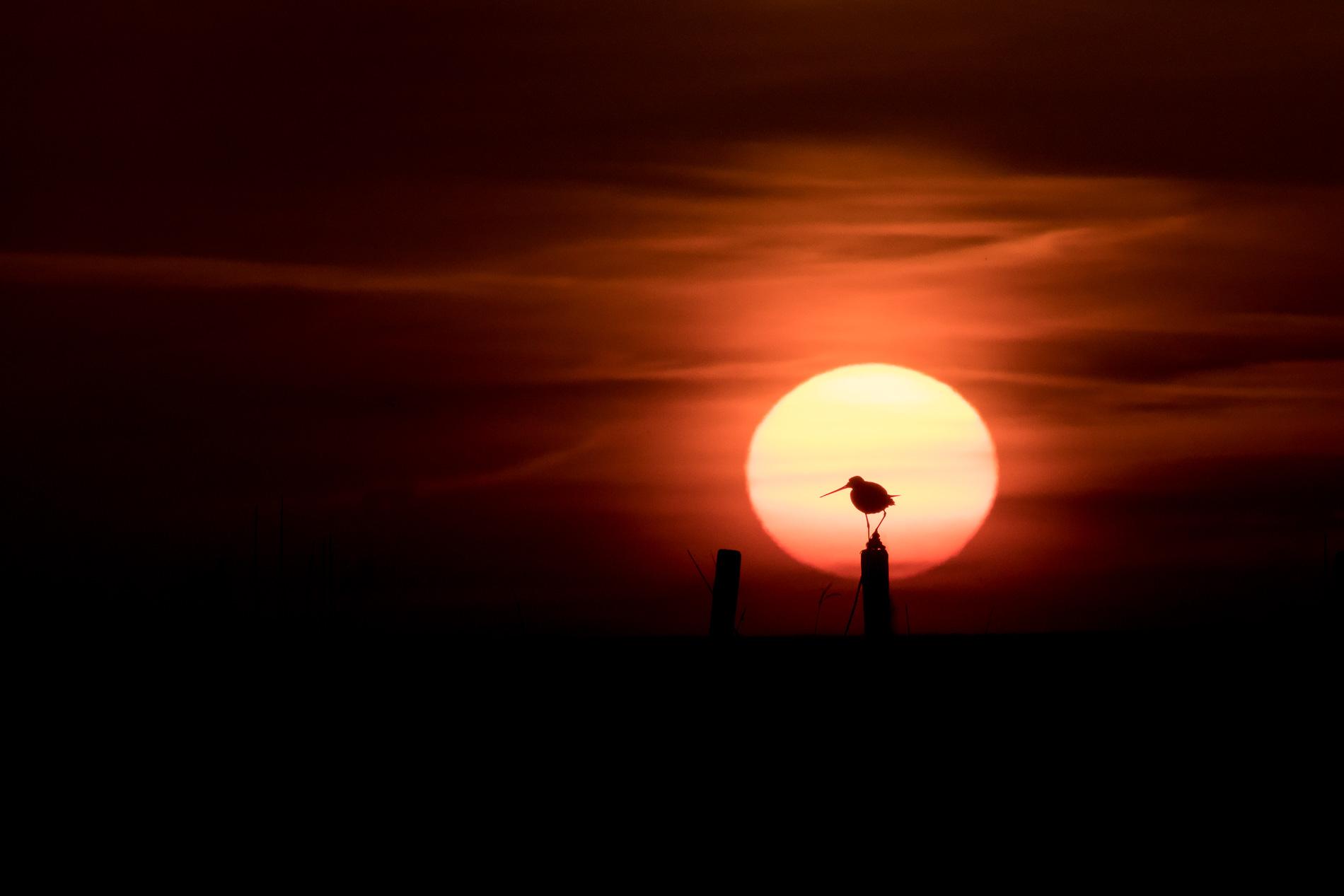 Grutto Voor De Zon