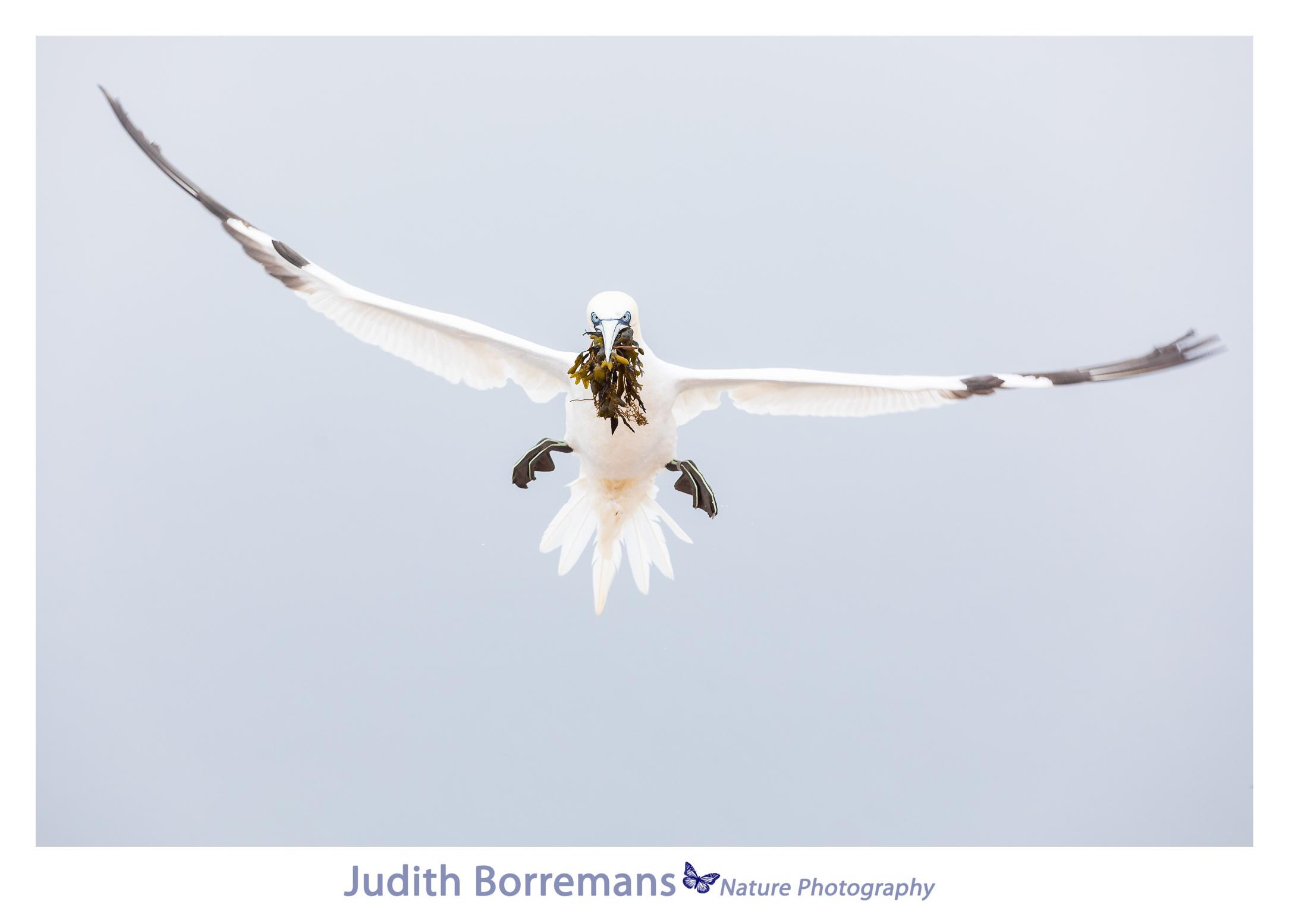 Jan Van Genten Fotograferen Op Helgoland