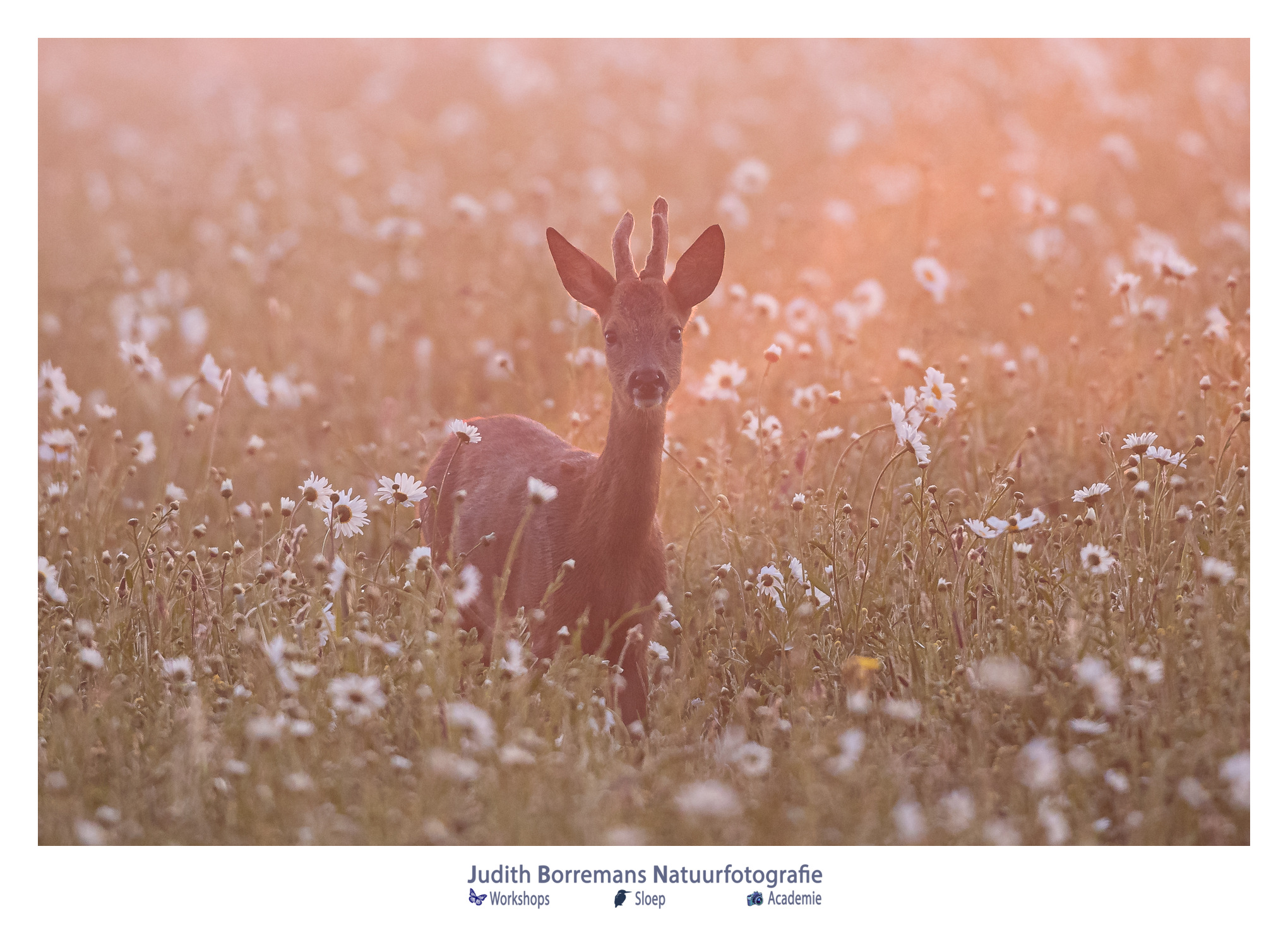 Weekend! Enjoy Nature (week 35_2020)