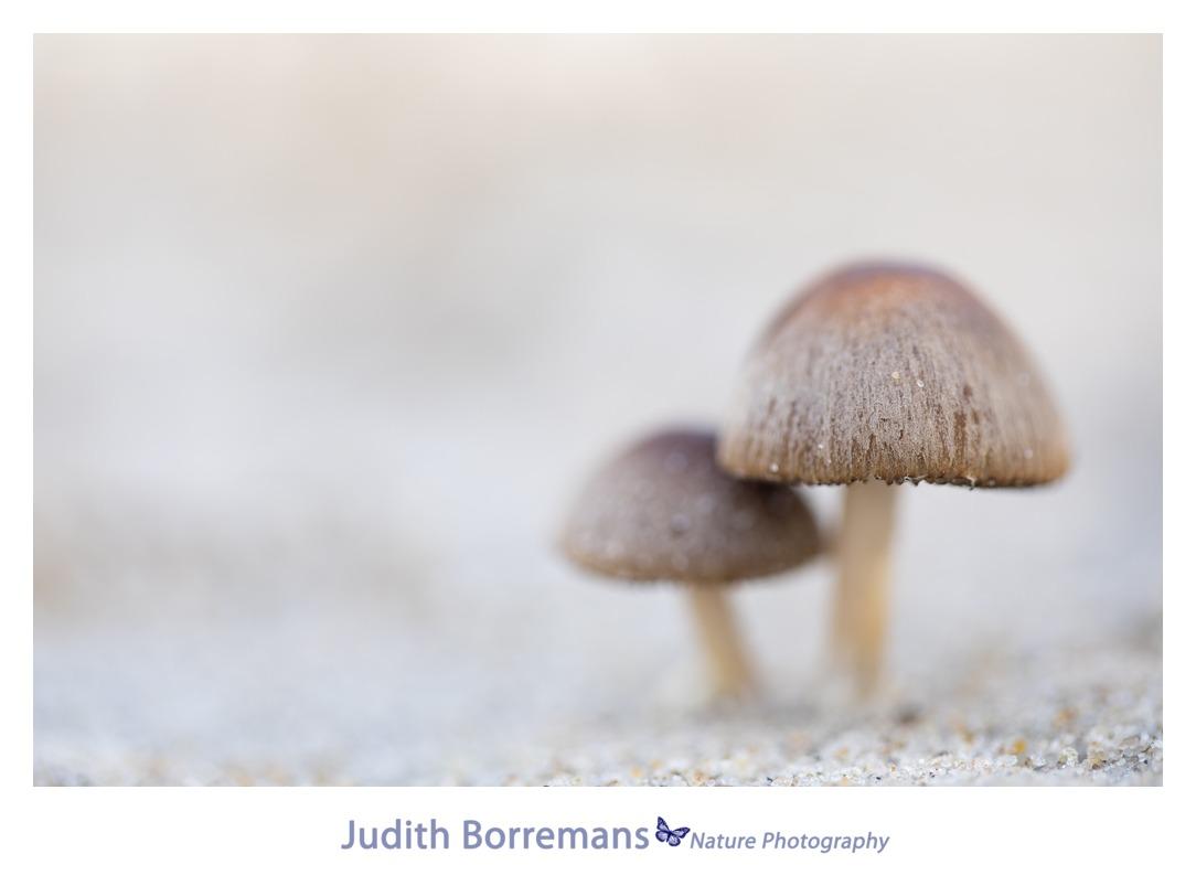 Workshop fotograferen op Texel