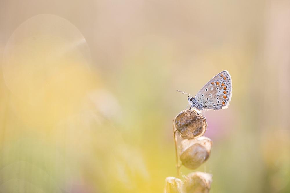 Workshop Vlinders Zeeland