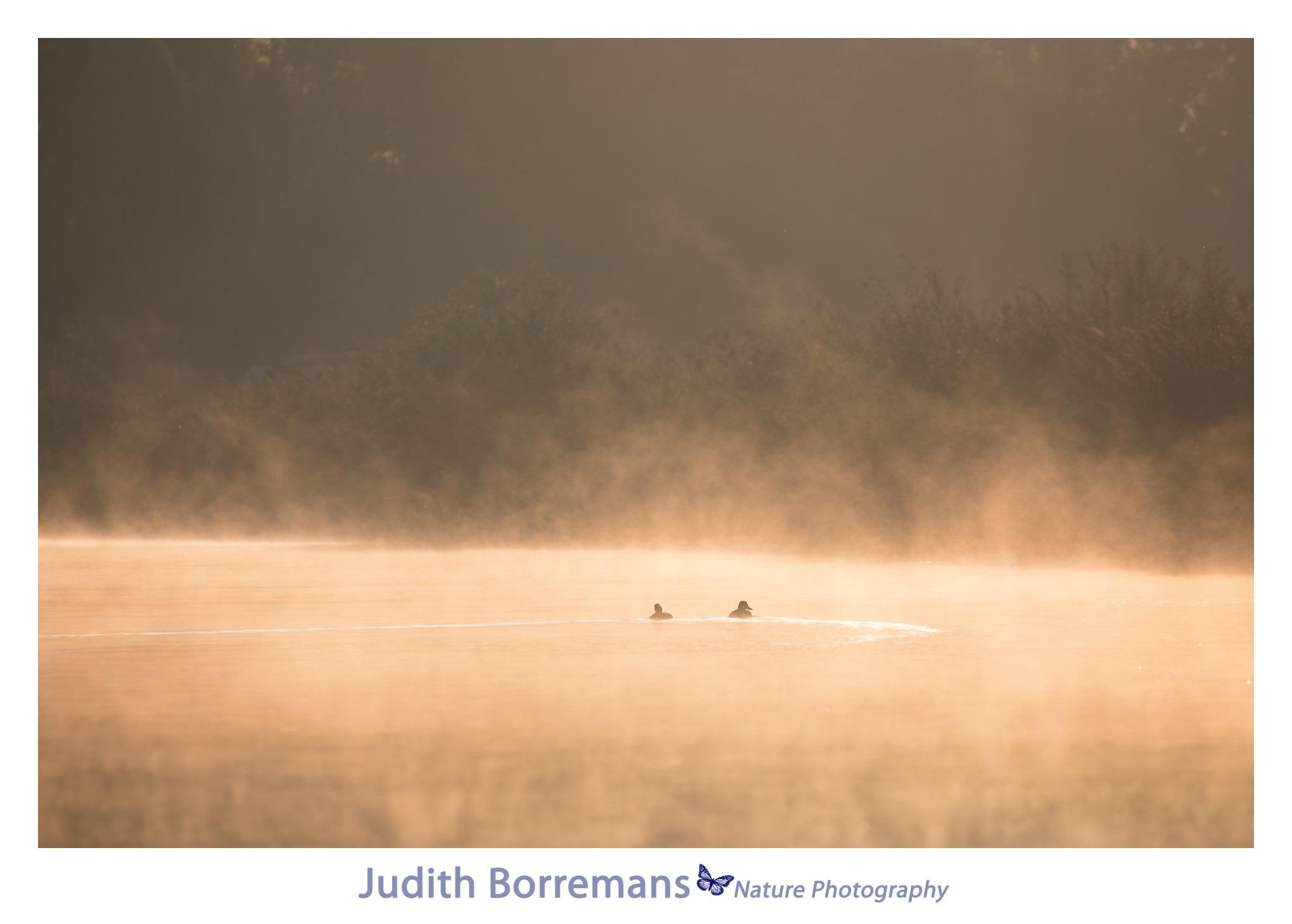 Beleef de Biesbosch met JBN Fotosloep
