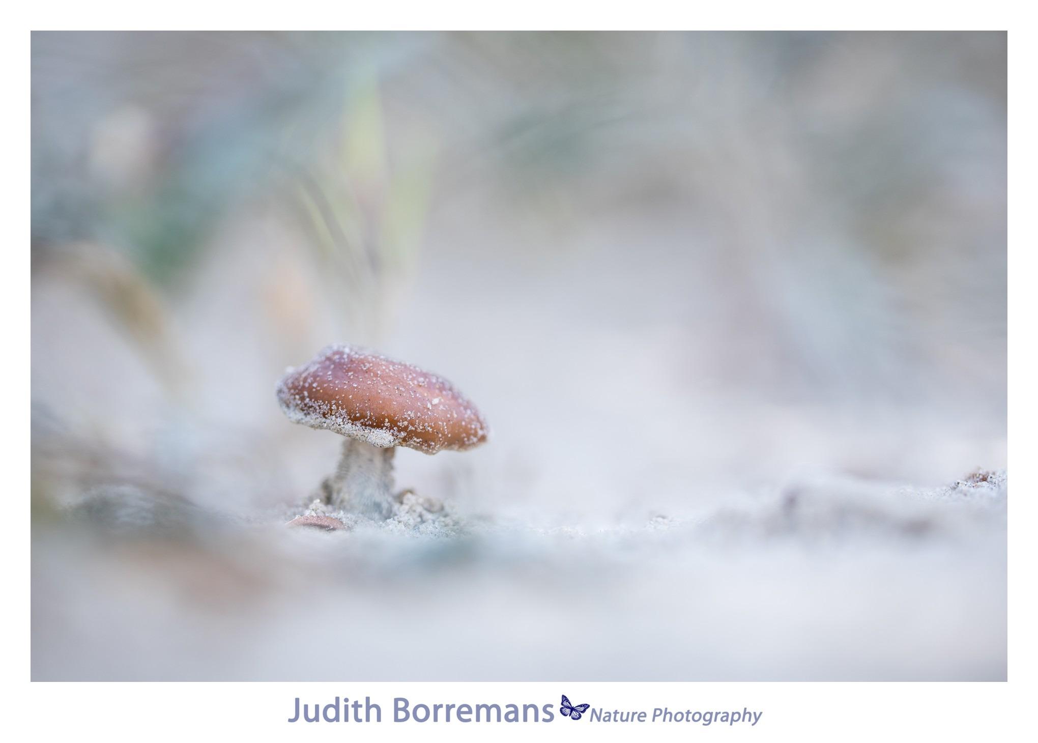 duinfranjehoedpaddenstoel