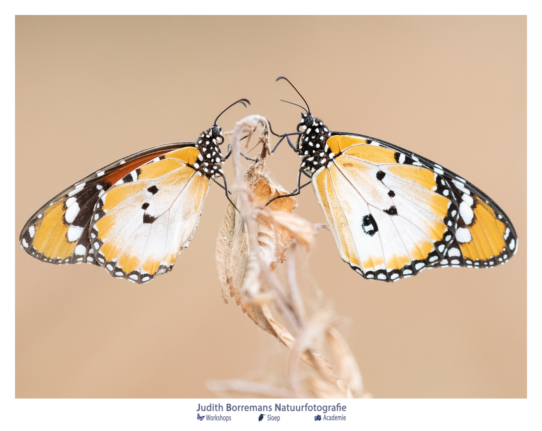 Bericht Bewerken ‹ Judith Borremans Workshops Natuurfotografie — WordPress
