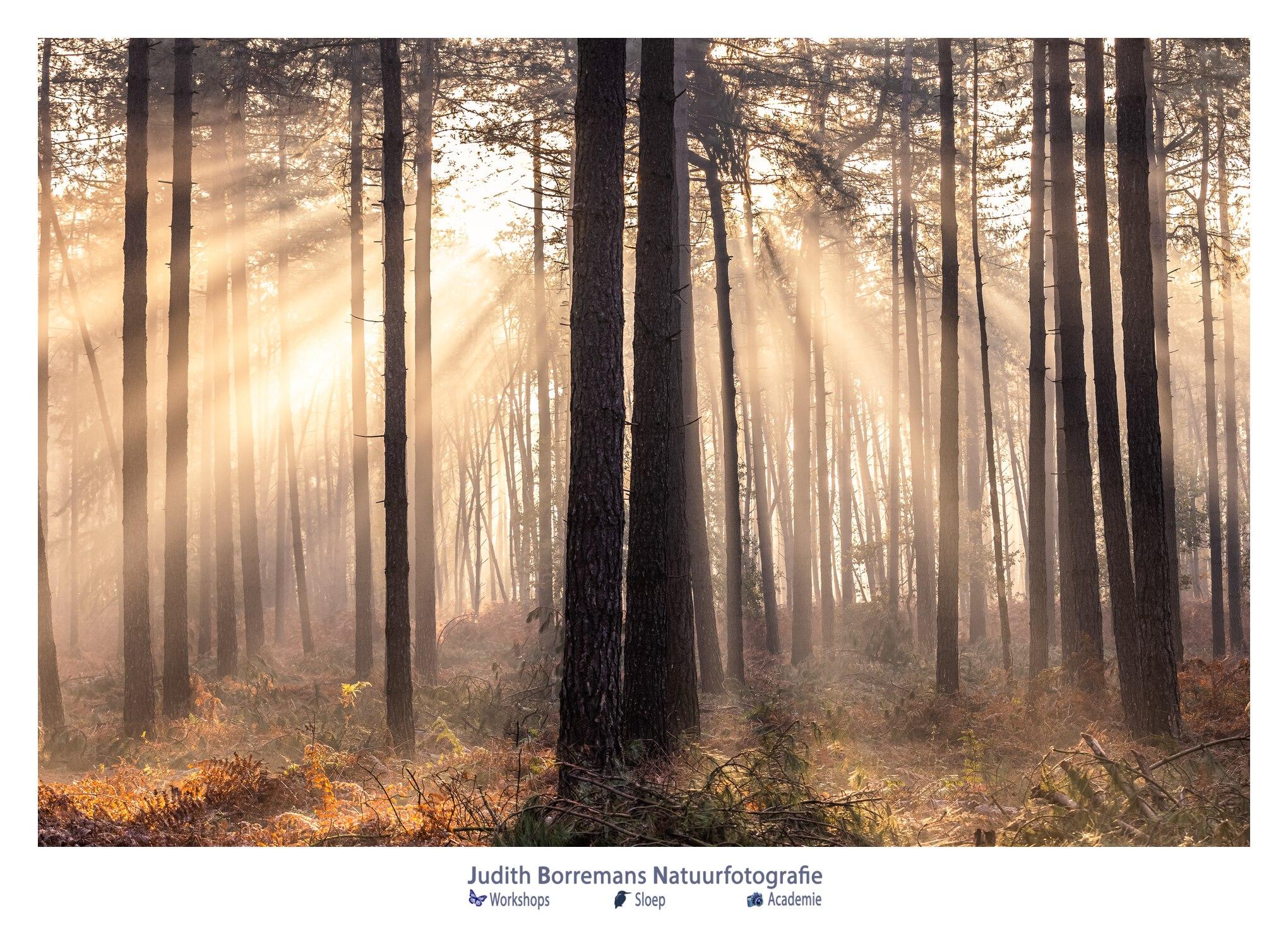 Zonneharpen In Het Mastbos