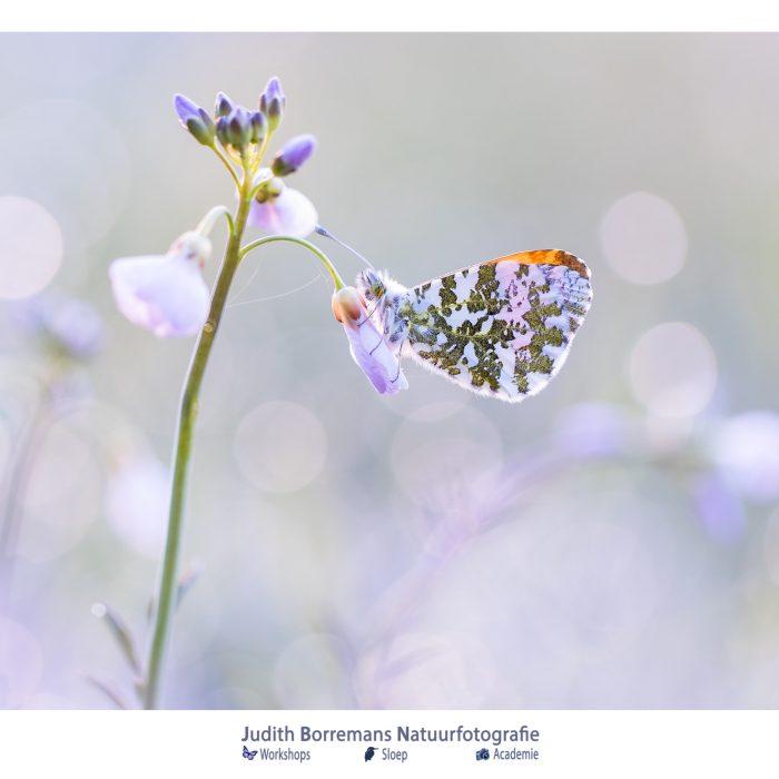 Weekend! Enjoy Nature (week 14_2020)