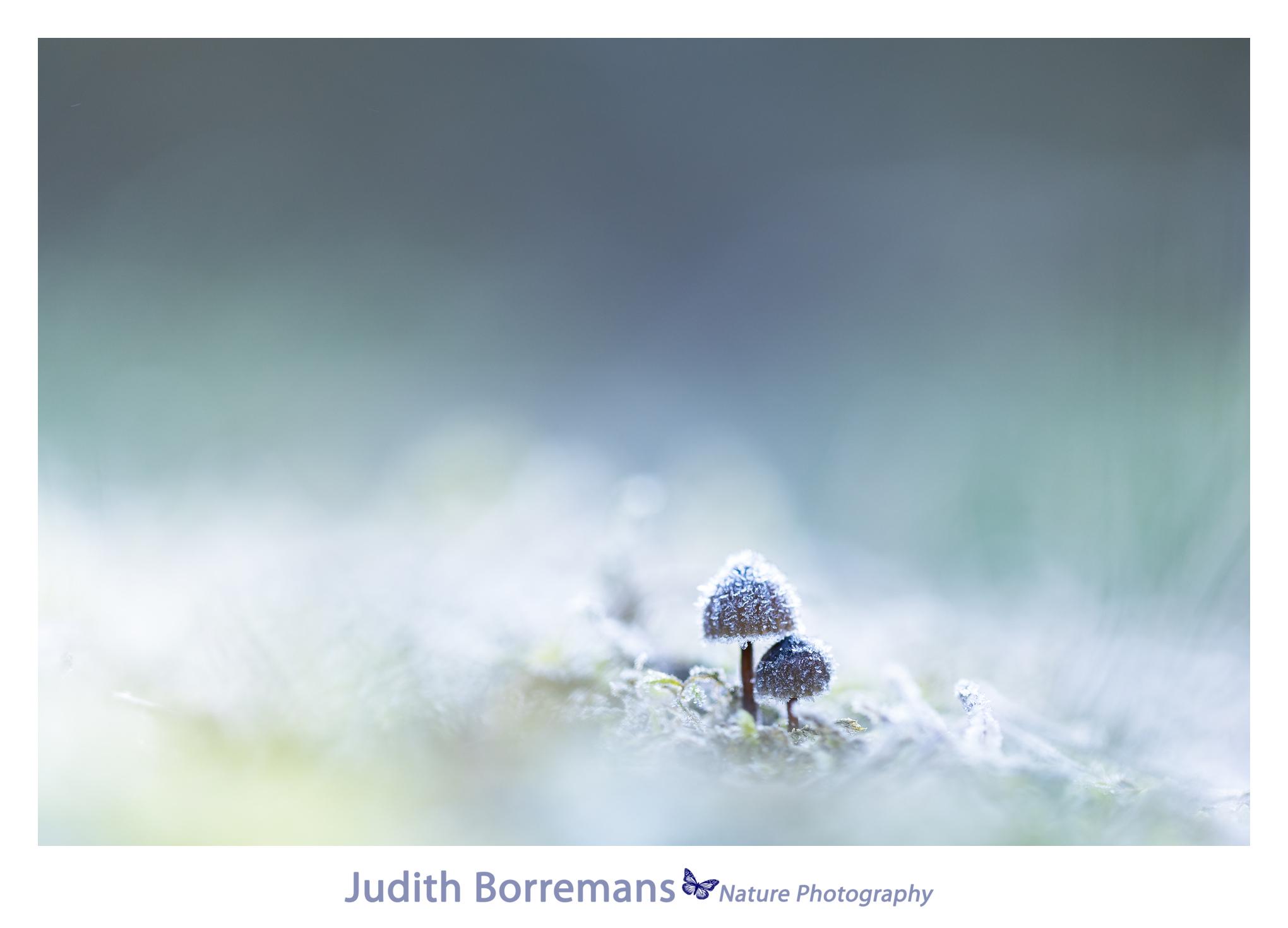 paddenstoeltjes met ijskristallen