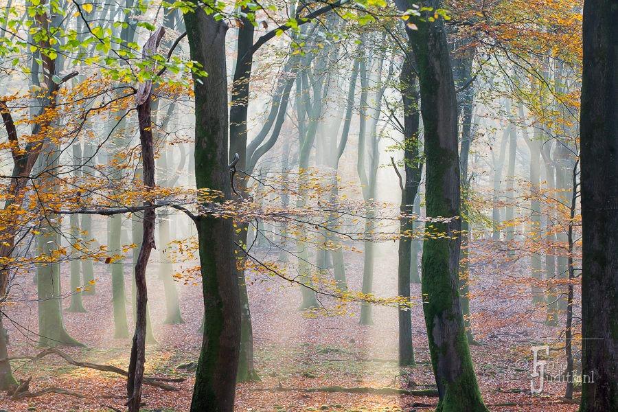 Magisch Licht In Het Speulderbos