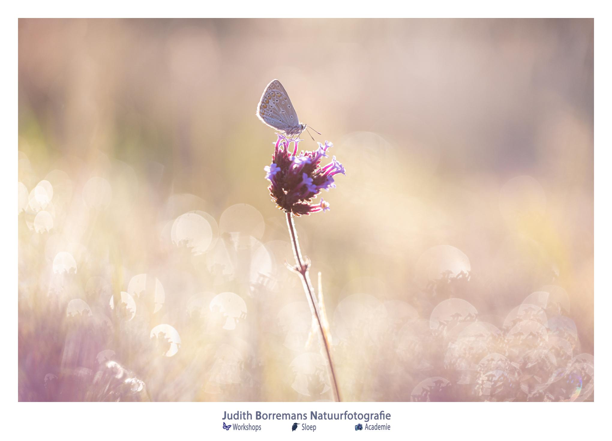 Weekend! Enjoy Nature (week 33_2020)