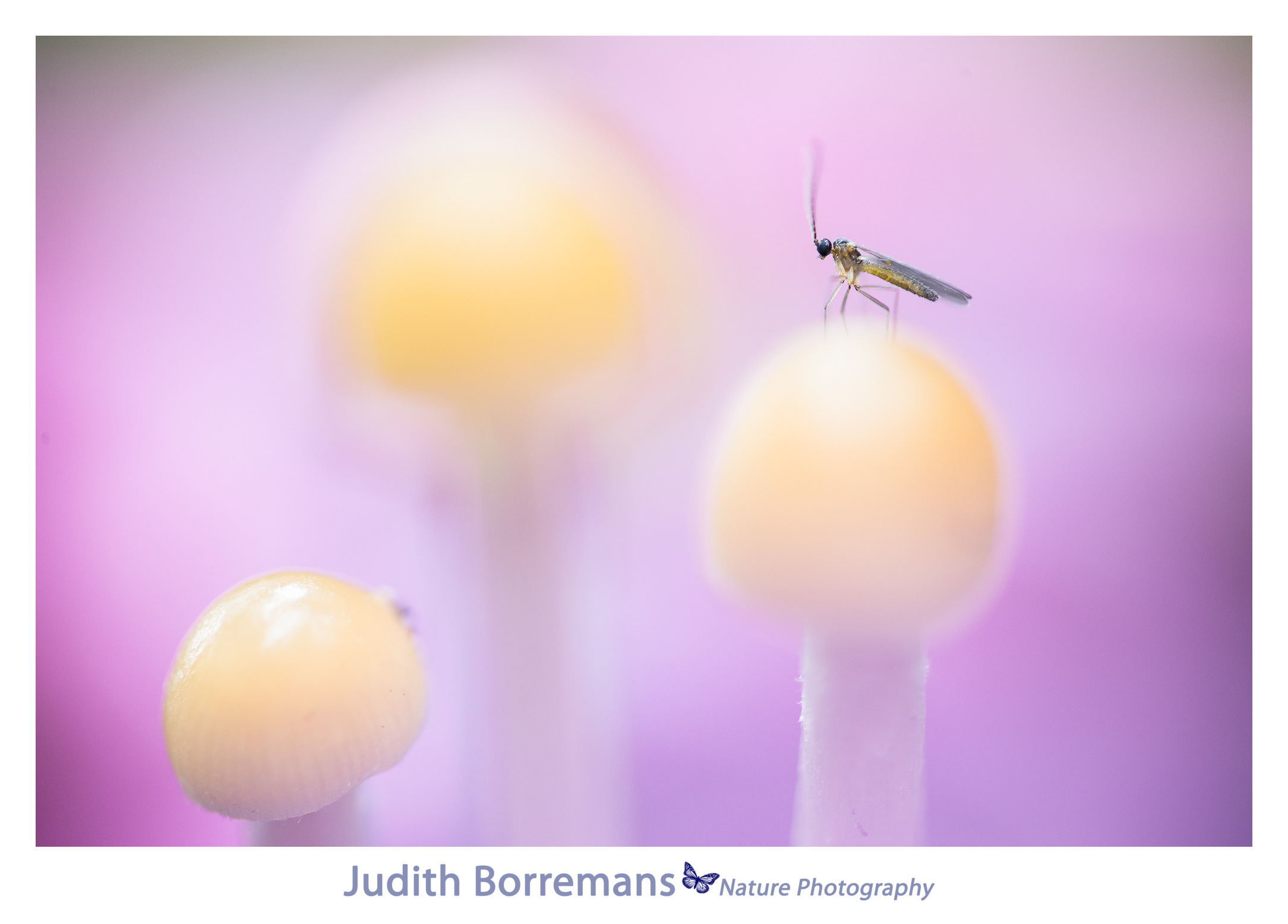 Insectje Op Paddenstoelen