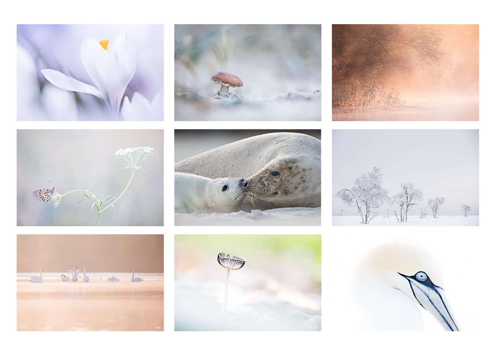 workshops natuurfotografie bij Judith Borremans